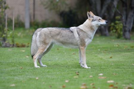 Brita Vlk z Východnej