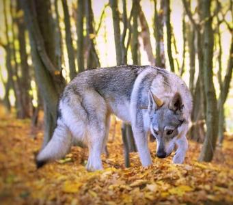 Arina Gemer Wolf