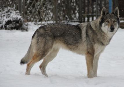 BRITA Saris wolfs