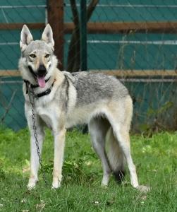 Bella Pheobes wolfs