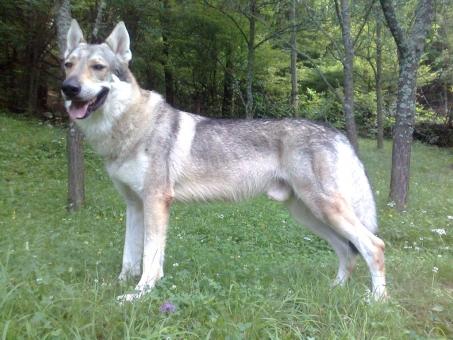 CIRITH Potomok vlkov