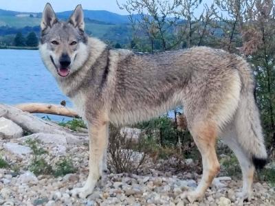 AURA z Údolia vlkov