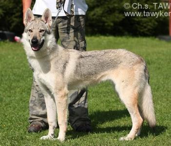 ALBA Saris Wolfs
