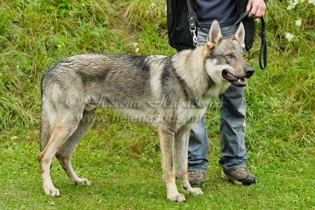 AGATHON WOLF Rhoderic sodar